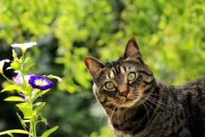 Spring Pet Care